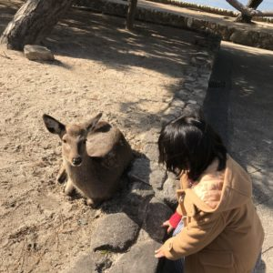 広島観光鹿編