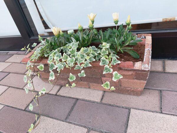 お花植え替え